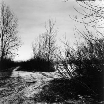 Graziella Reggio - Landscapes